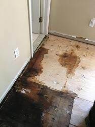 Water Damage on Wooden Floor